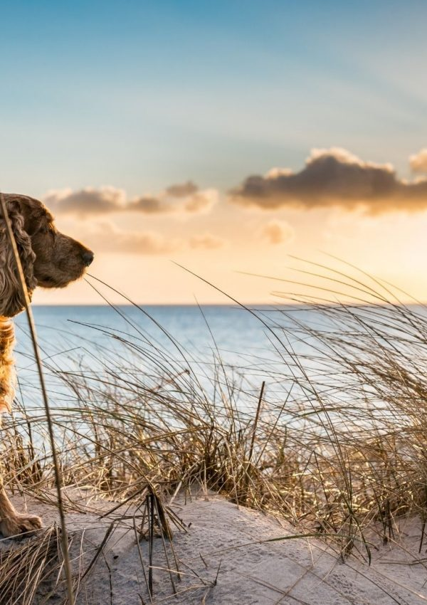 Top Dog Beaches in the USA