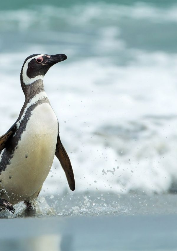Top Attractions in the Falkland Islands