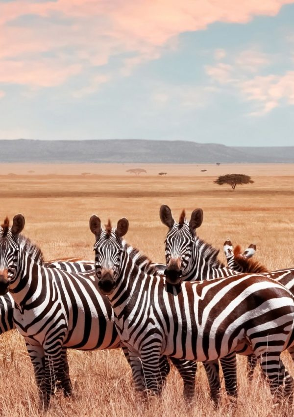 Best Way to Explore the Immense Serengeti in Tanzania