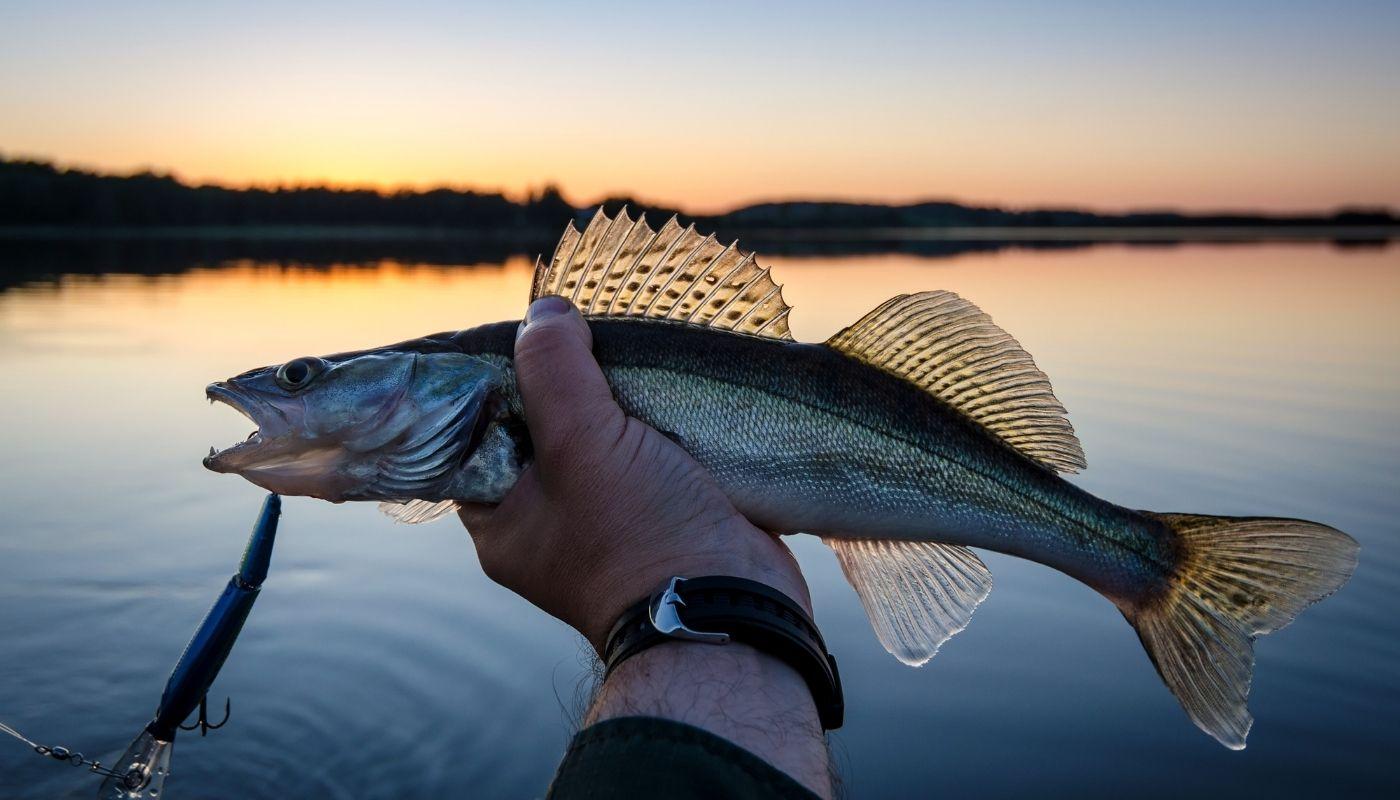 fishing on isle royale