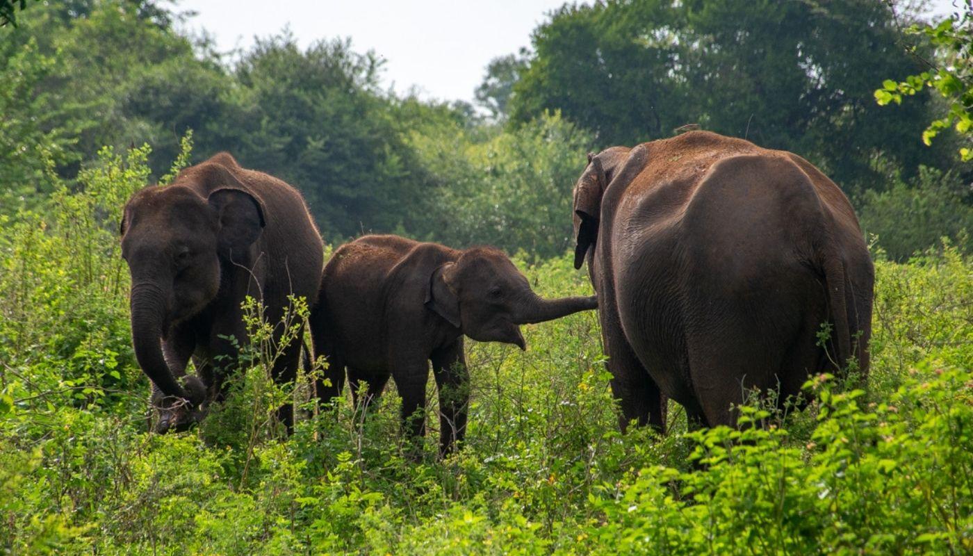 Udawalawe National Park beautiful national parks