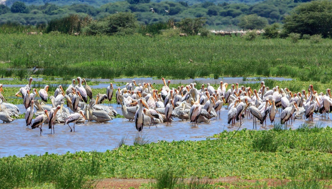 beautiful Lake Manyara Tanzania