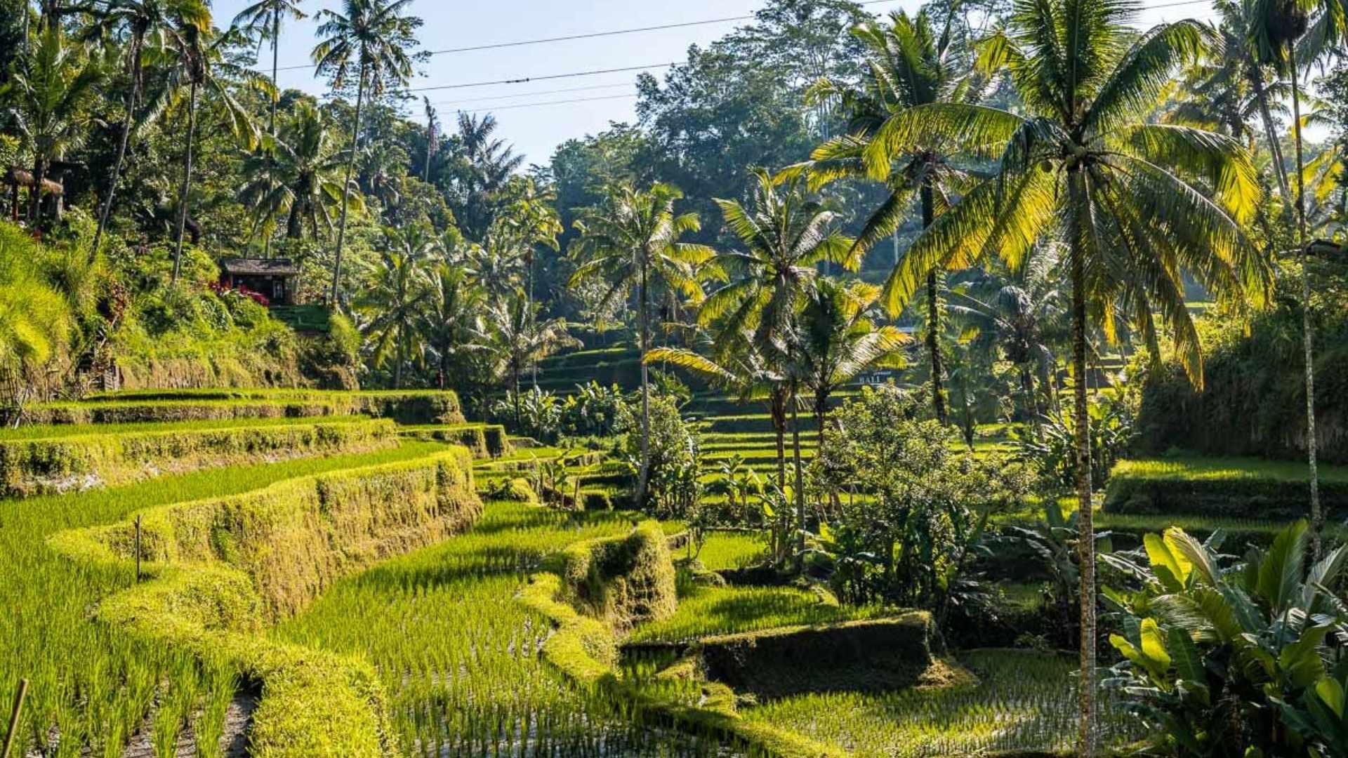 scenic islands Bali